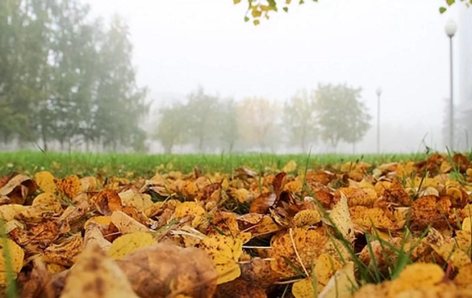 Похоже, что осень в Прикамье уверенно вступила в свои права.