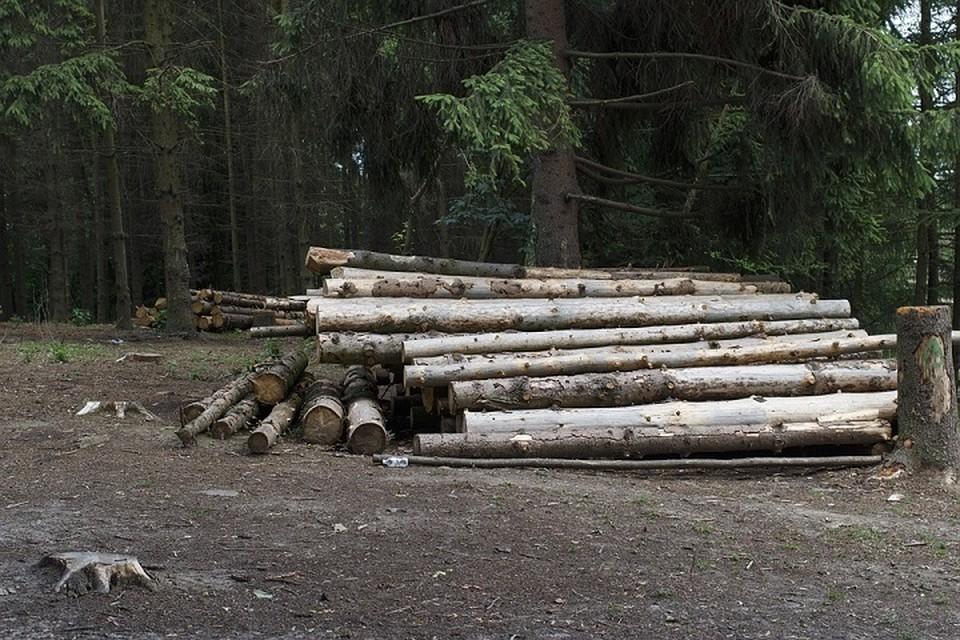 В Минлесхозе сказали о росте объемов заготовки древесины. Фото: pixabay.com.